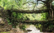 ponte natural 1 - cherrapunji