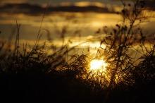 sunset-747579_1280